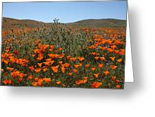 Fiddlenecks And Poppies Greeting Card