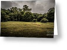 Field And Tress Greeting Card