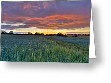 Field At Sunset Greeting Card