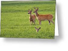 Field Deer Greeting Card