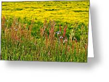 Field In Spring Greeting Card by Beverly Hammond