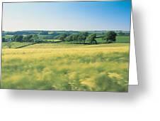 Field Near Barnstaple, North Devon Greeting Card