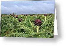 Field Of Artichokes Greeting Card