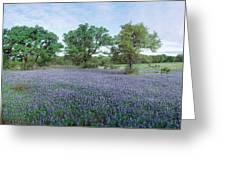 Field Of Bluebonnet Flowers, Texas, Usa Greeting Card