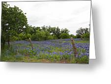 Field Of Bluebonnets Greeting Card