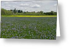 Field Of Camas And Western Buttercup Greeting Card
