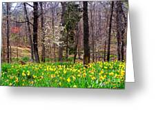 Field Of Daffodils Greeting Card