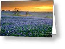 Field Of Dreams Texas Sunset - Texas Bluebonnet Wildflowers Landscape Flowers  Greeting Card by Jon Holiday
