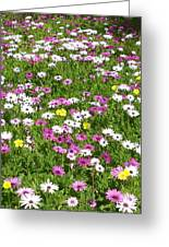 Field Of Flowers Greeting Card by Deborah Montana