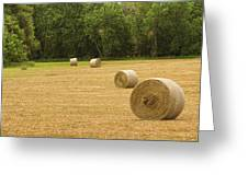 Field Of Freshly Baled Round Hay Bales Greeting Card