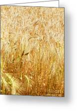 Field Of Gold 1 Greeting Card