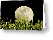 Field Of Gold By Moonlight Greeting Card