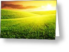 Field Of Grass And Sunset Greeting Card