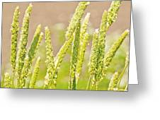 Field Of Grass And Wildflowers II Greeting Card by Artist and Photographer Laura Wrede