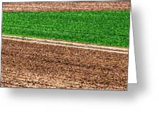Field Of Green 14552 Greeting Card