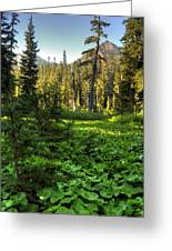 Field Of Green And Gold Greeting Card