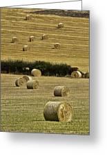 Field Of Hay Bales Greeting Card