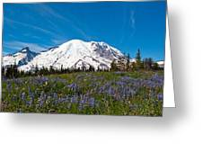 Field Of Lupines And Rainier Greeting Card