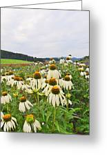 Field Of Medicine Perspective Greeting Card