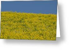 Field Of Mustard Greeting Card