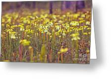 Field Of Pitcher Plants Greeting Card