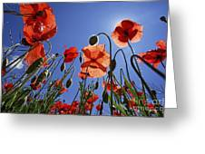 Field Of Poppies At Spring Greeting Card