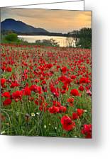 Field Of Poppies At The Lake Greeting Card
