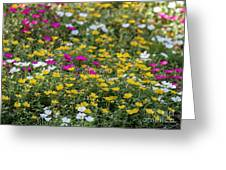 Field Of Pretty Flowers Greeting Card