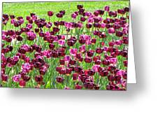 Field Of Purple Tulips 1 Greeting Card