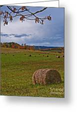Field Of Round Bales Greeting Card