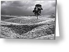 Field Of Saddle Road Dreams Greeting Card
