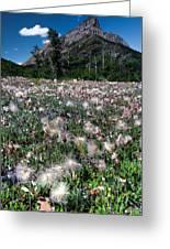 Field Of Seeding Flowers Greeting Card