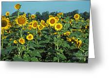 Field Of Smiley Faces Greeting Card
