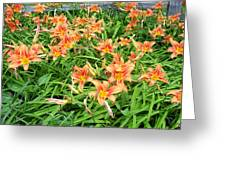 Field Of Tiger Lilies Greeting Card