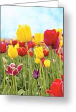 Field Of Tulip Flowers Against Blue Sky Greeting Card