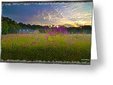 Field Of View Sunset Greeting Card