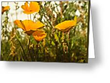 Field Of Yellow Poppies Greeting Card