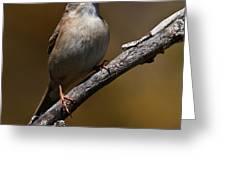 Field Sparrow Pictures 23 Greeting Card