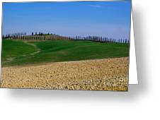 Field With Cypress Trees Greeting Card
