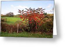 Field With Sumac In Autumn Greeting Card