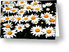 Fields Of Daisies Greeting Card