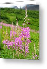 Fields Of Fireweed Greeting Card