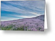 Fields Of Lupine 1 Greeting Card