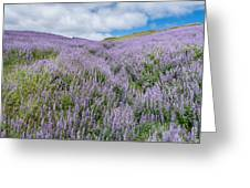 Fields Of Lupine 3 Greeting Card