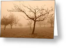 Fields Of Trees Greeting Card