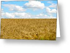 Fields Of Wheat Greeting Card