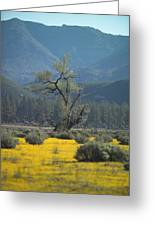 Fields Of Yellow Foxglove Greeting Card