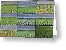 Fields Panel Greeting Card
