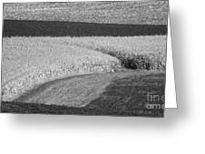 Fields Greeting Card