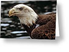 Fierce Bald Eagle Greeting Card